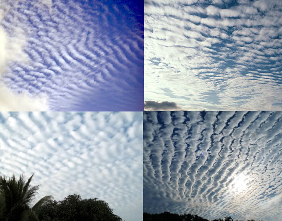 actually, they're all altocumulus, but some people have been known to make that mistake